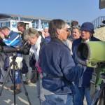 Observation des phoques gris
